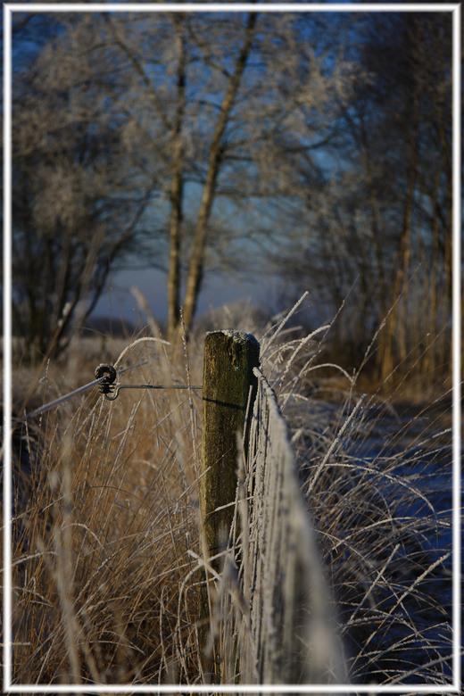 Rijp - de winterfoto&#039;s blijven maar komen en ik doe er ook wat bij!<br /> Rijp in het Bargerveen.