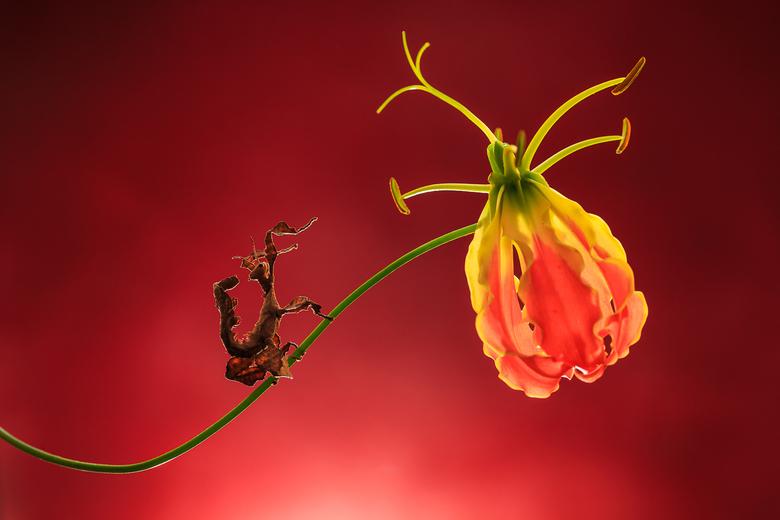 Fire Wire, Flower Hour - Flappentak op een bloem