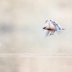 Free as a bird ...