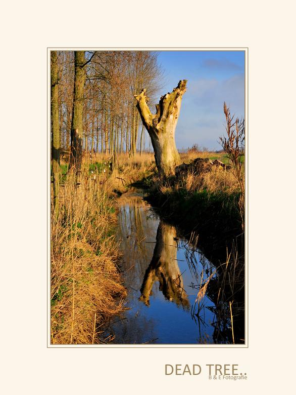 Dead Tree.. - Dag mensen, bedankt voor jullie leuke reacties op de vorige, voor diegene die nieuwsgierig zijn hoe 't verder verloopt, woensdag do