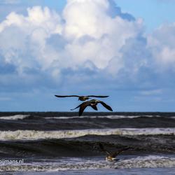 Vogels op het strand bij Buren op Ameland