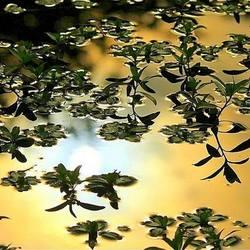Waterig zonnetje .....