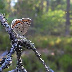 vlindertje in boom