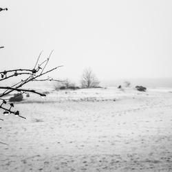 Kootwijkerzand in de mist
