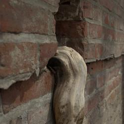 Boomwortel uit muur