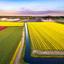 Nederlandse tulpen en molen met een drone