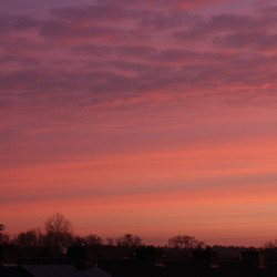 morning glory1