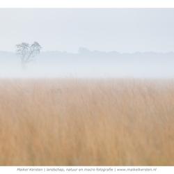 Foggy Tree | De Kampina | Boxtel