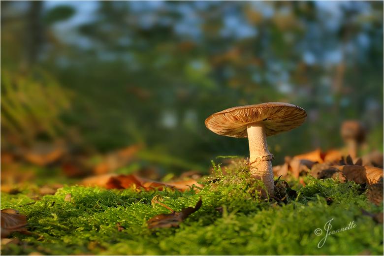 """Minilandschap. - Een zonnig herfsttafereeltje.................meer kan ik er niet over zeggen/schrijven..<img  src=""""/images/smileys/smile.png""""/>"""