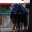 Onder moeders paraplu verkleind