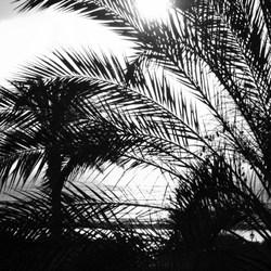 Zonsopgang Fuertaventura