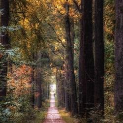 Veel kleur in het bos/ herfst