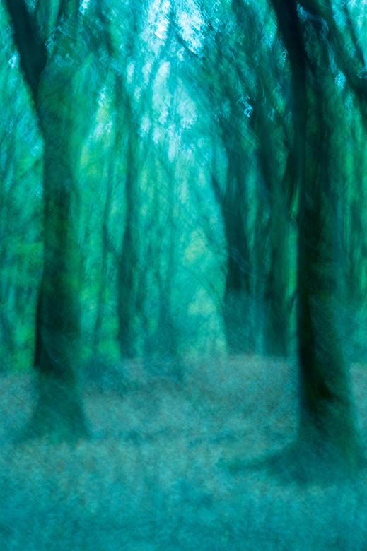 Dansende bomen - De dansende bomen van het Speulderbos.<br /> <br /> Bewust de camera bewogen en de witbalans aangepast.
