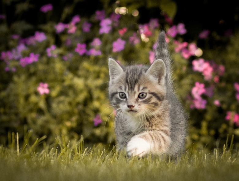Kleine tijger  - 1 van de kittens in de achtertuin