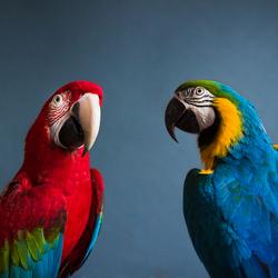 Papegaaien portret