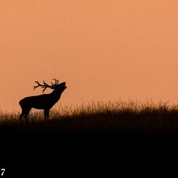 Ondergaande zon en het hert