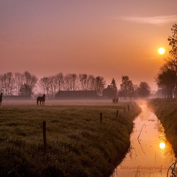 Horses in the mist..........