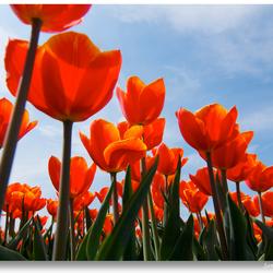Polders-voorjaar