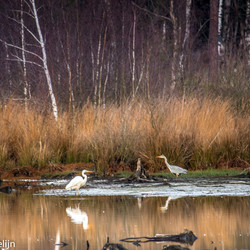 2 reigers