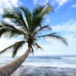 reizende palmboom