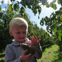 appel en peren plukdag