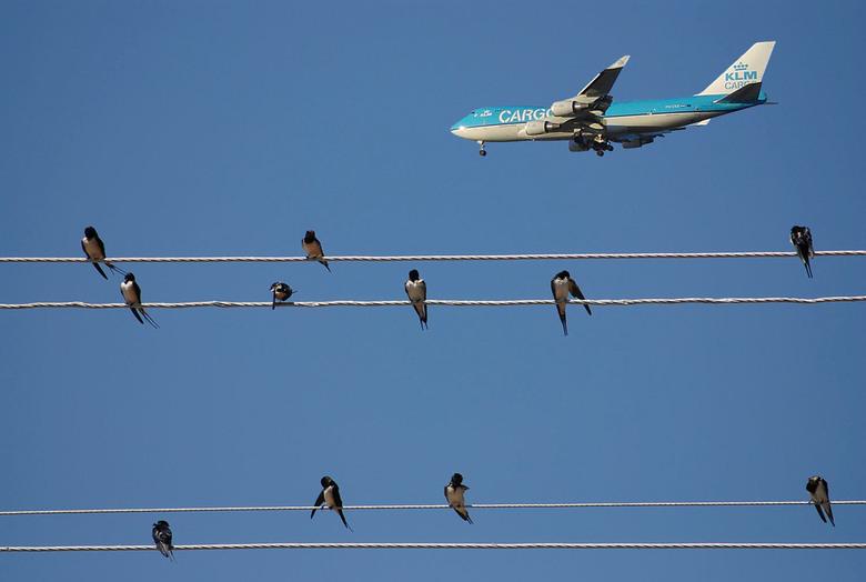 Zwaluwen - Zwaluwen in Oren Turkije