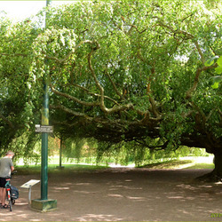Beuk in Bayeux