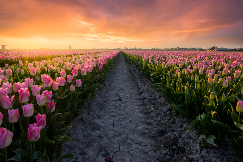 Dutch Pride - Enjoy the Flowers, respect our Pride<br /> (No tulips were harmed taking this shot)<br /> <br /> (c)2019 martijnvandernat.nl all righ