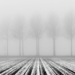 Foggy lines