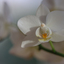 een orchidee    251