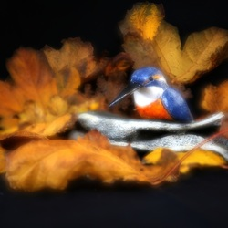 Kingfisher in Multiple Exposure