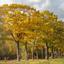 Eiken in herfstkleuren
