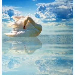 SWAN IN HEAVEN..