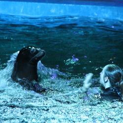 Ouwehands dierenpark zeeleeuwenshow