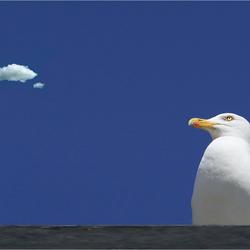 Birds can fly