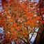 Oranje boom herfst