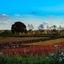 Brabantse velden