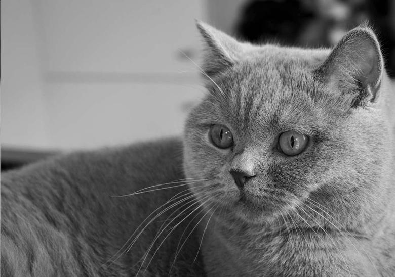 Portret Poes - Voor een fotoreportage heb ik deze zwart wit foto's gemaakt