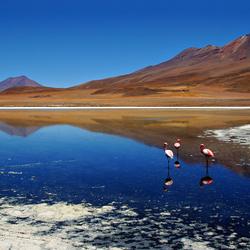 Flamingo's op 4300 meter...