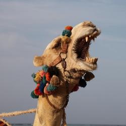 Egypten laat zijn tanden zien
