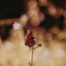 Vlinder op een stokje