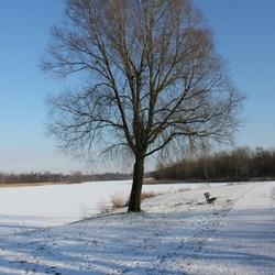 koele winterlucht