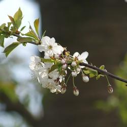 Blossom brench