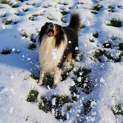 Happen naar de sneeuw