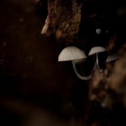 Micro paddenstoeltjes