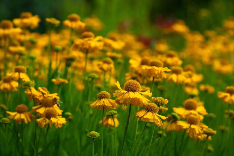 Botanische Tuin Terwinselen - Sinds mijn prille jeugd kwam ik met mijn ouders regelmatig in de Botanische Tuin van Terwinselen. Een nostalgisch bezoek
