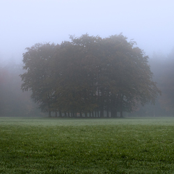 Foggy morning v2