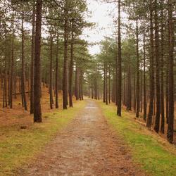 De bossen van Schoorl