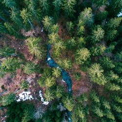 Smelt water dat zich door de bossen probeert te bewegen