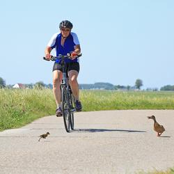 Wildlife in Nederland